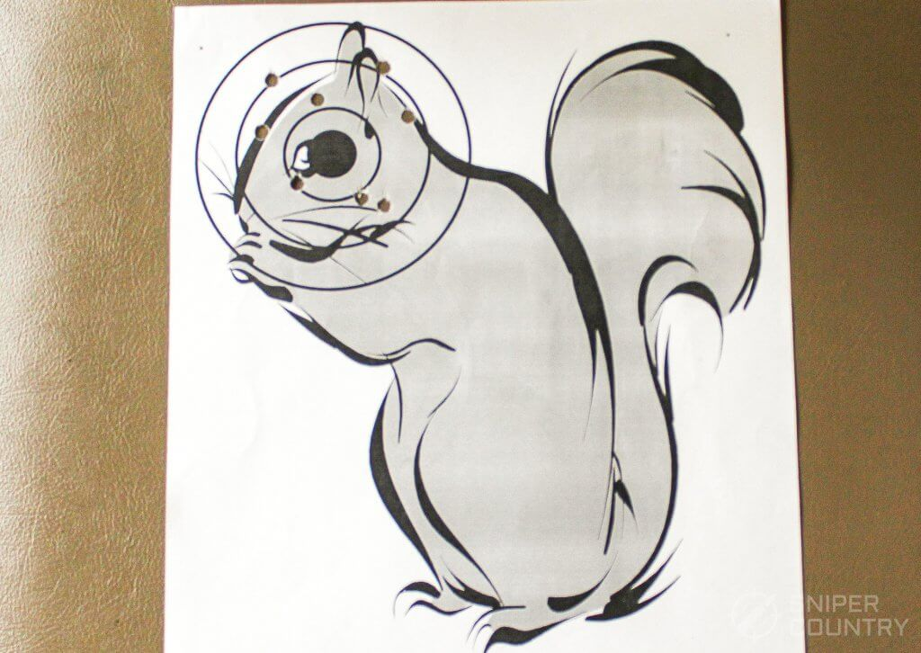target squirrel shot with Gamo rifle